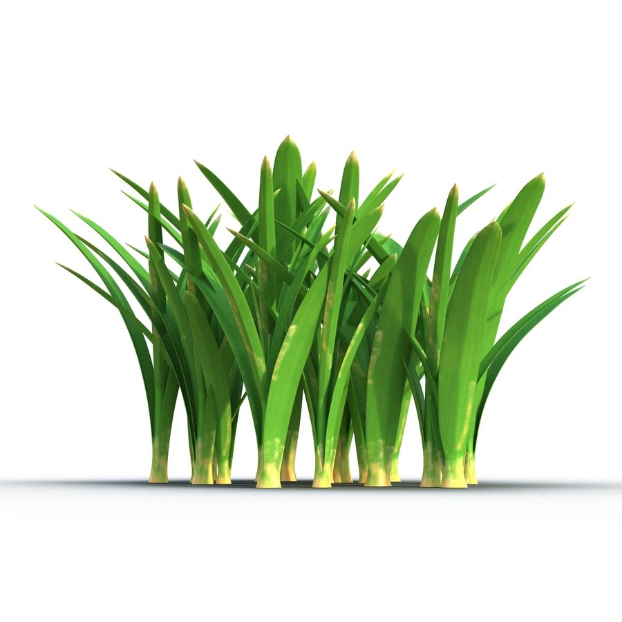 Grass 3 royalty-free 3d model - Preview no. 6