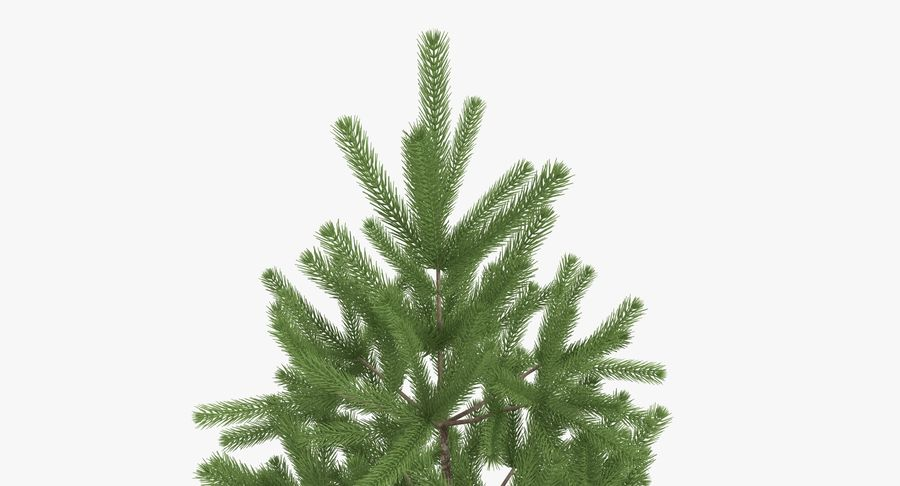 Fir Tree royalty-free 3d model - Preview no. 8
