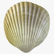 Sea Shell 7 3d model