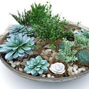 сочные композиции растений 3d model