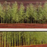 Бамбуковое дерево 3d model