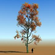 Rainforest Tree Custom Season 04 3d model