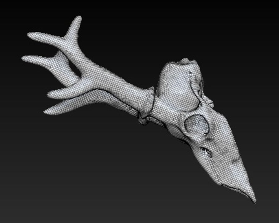 animal skull royalty-free 3d model - Preview no. 4