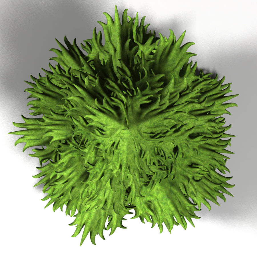 Fir Tree royalty-free 3d model - Preview no. 2