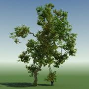 Rainforest Tree Custom Season 02 3d model