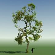 Rainforest Tree Custom Season 01 3d model