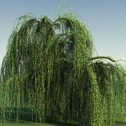 WEEPING WILLOW TREE 01 3d model
