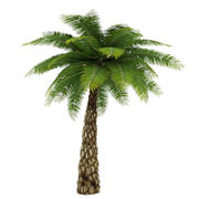 Date Palm Tree Low Poly 3d model