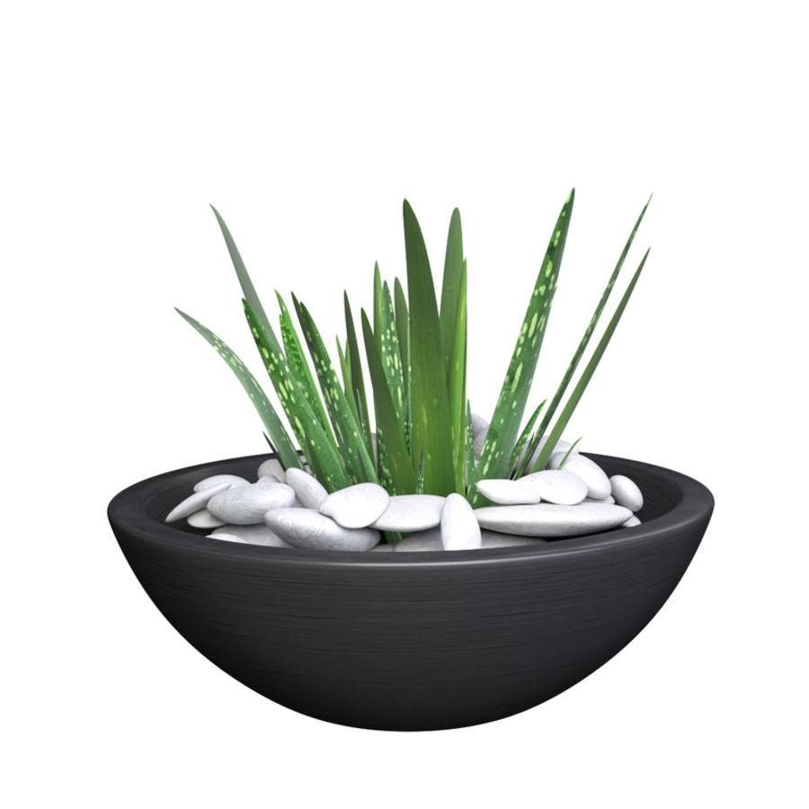 Image Plante Aloe Vera aloe vera - potted plant 2 3d model $6 - .unknown .obj .fbx