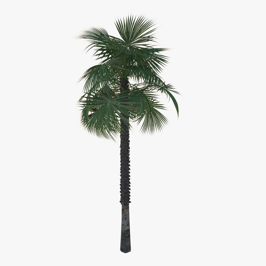 Drzewo palmowe royalty-free 3d model - Preview no. 3