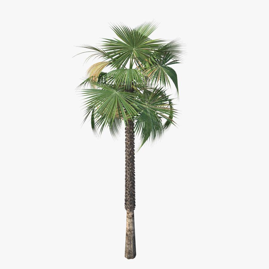 Drzewo palmowe royalty-free 3d model - Preview no. 4
