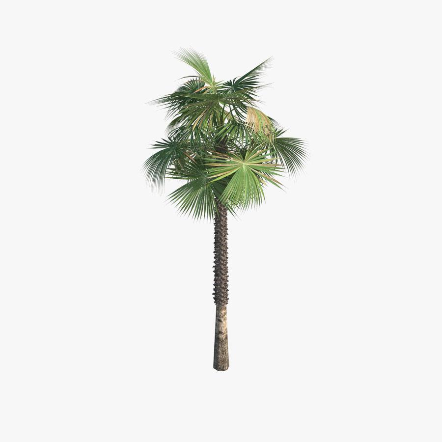 Drzewo palmowe royalty-free 3d model - Preview no. 2