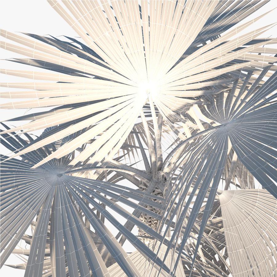 Drzewo palmowe royalty-free 3d model - Preview no. 12