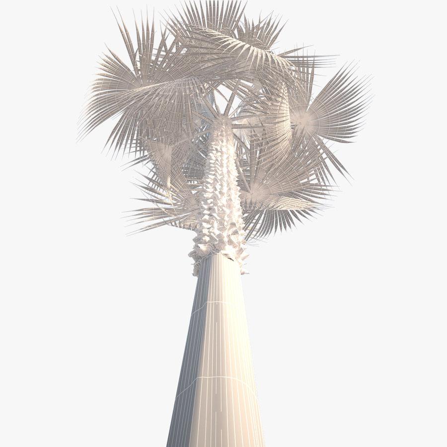 Drzewo palmowe royalty-free 3d model - Preview no. 10