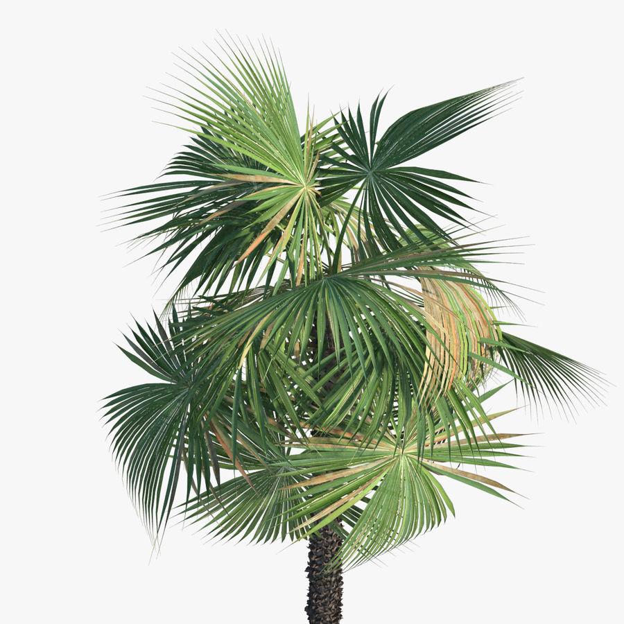 Drzewo palmowe royalty-free 3d model - Preview no. 7