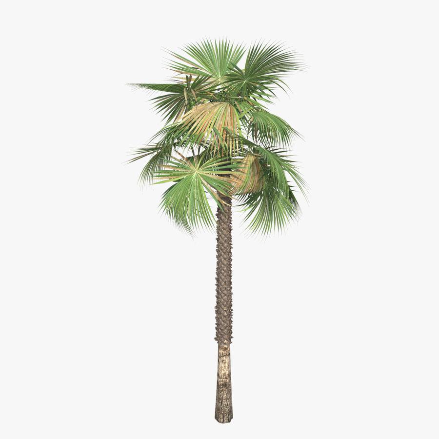 Drzewo palmowe royalty-free 3d model - Preview no. 5