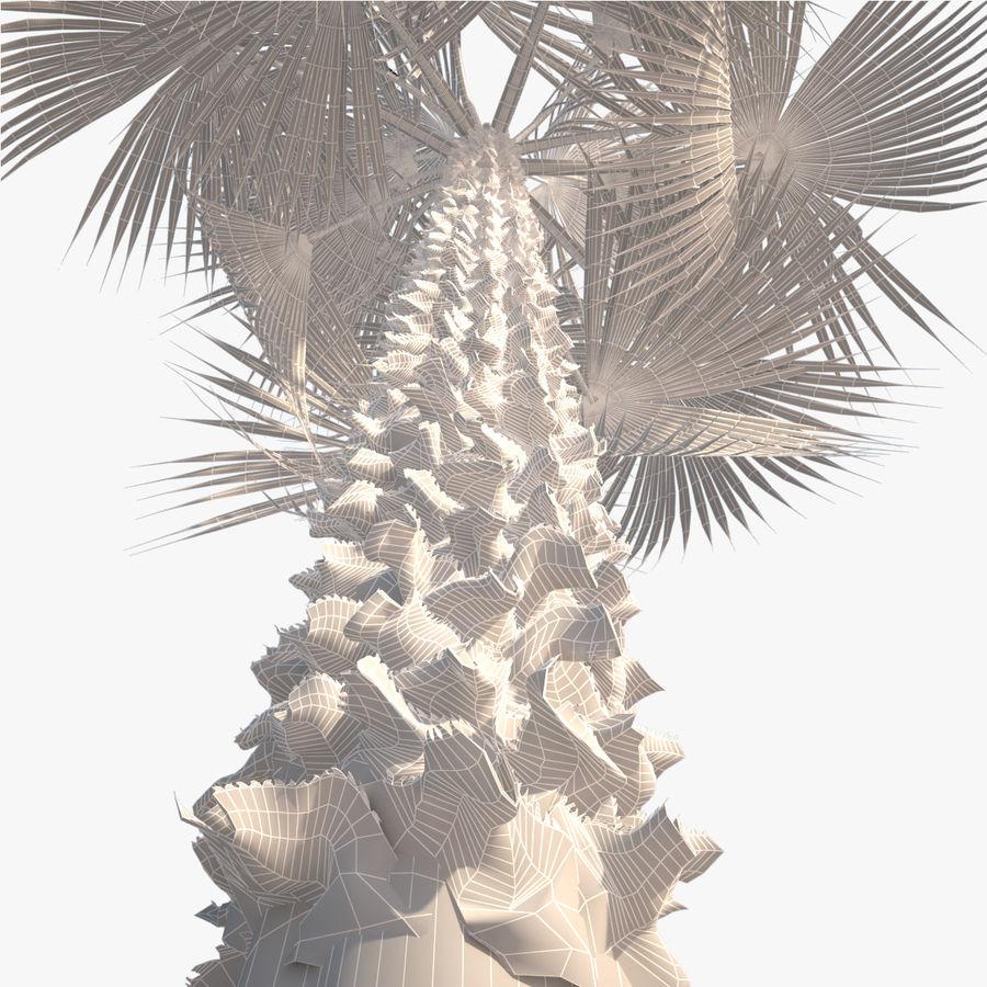 Drzewo palmowe royalty-free 3d model - Preview no. 11