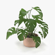 Planta de Monstera Animada 3d model
