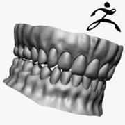 歯ベースメッシュZbrush 3d model