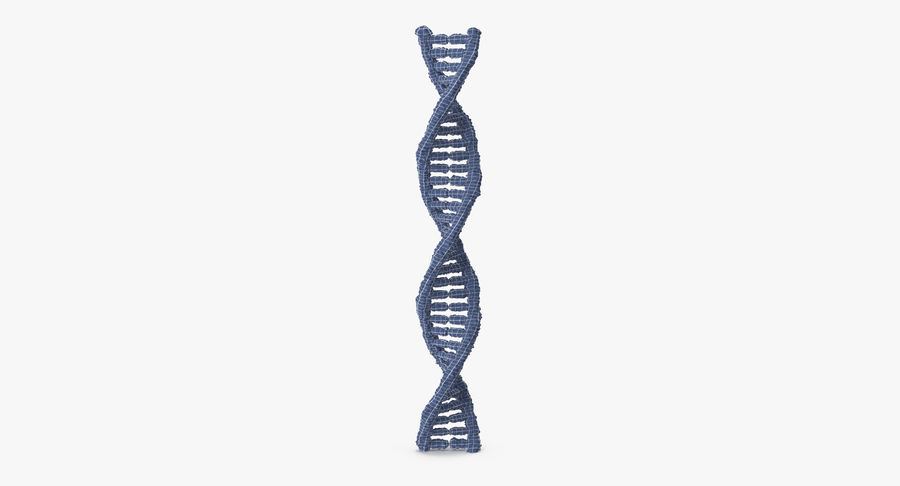 DNA royalty-free 3d model - Preview no. 10