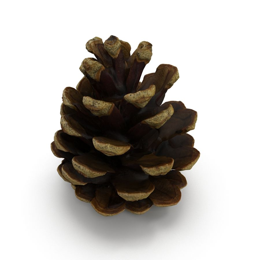 Pine Cone Open royalty-free 3d model - Preview no. 3