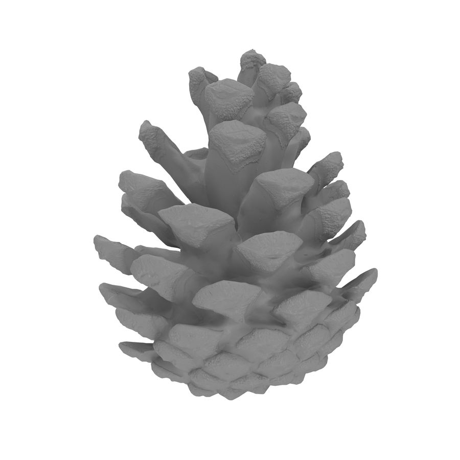 Pine Cone Open royalty-free 3d model - Preview no. 8