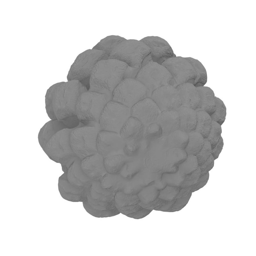 Pine Cone Open royalty-free 3d model - Preview no. 10