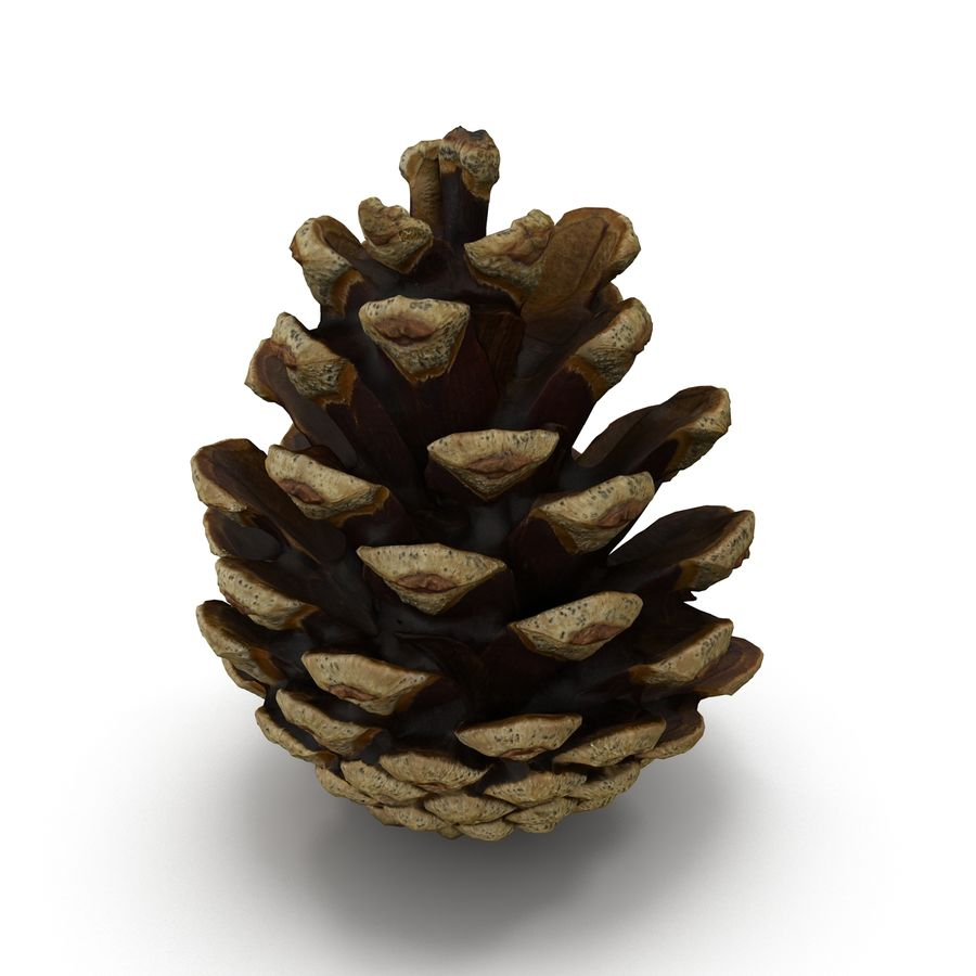 Pine Cone Open royalty-free 3d model - Preview no. 2