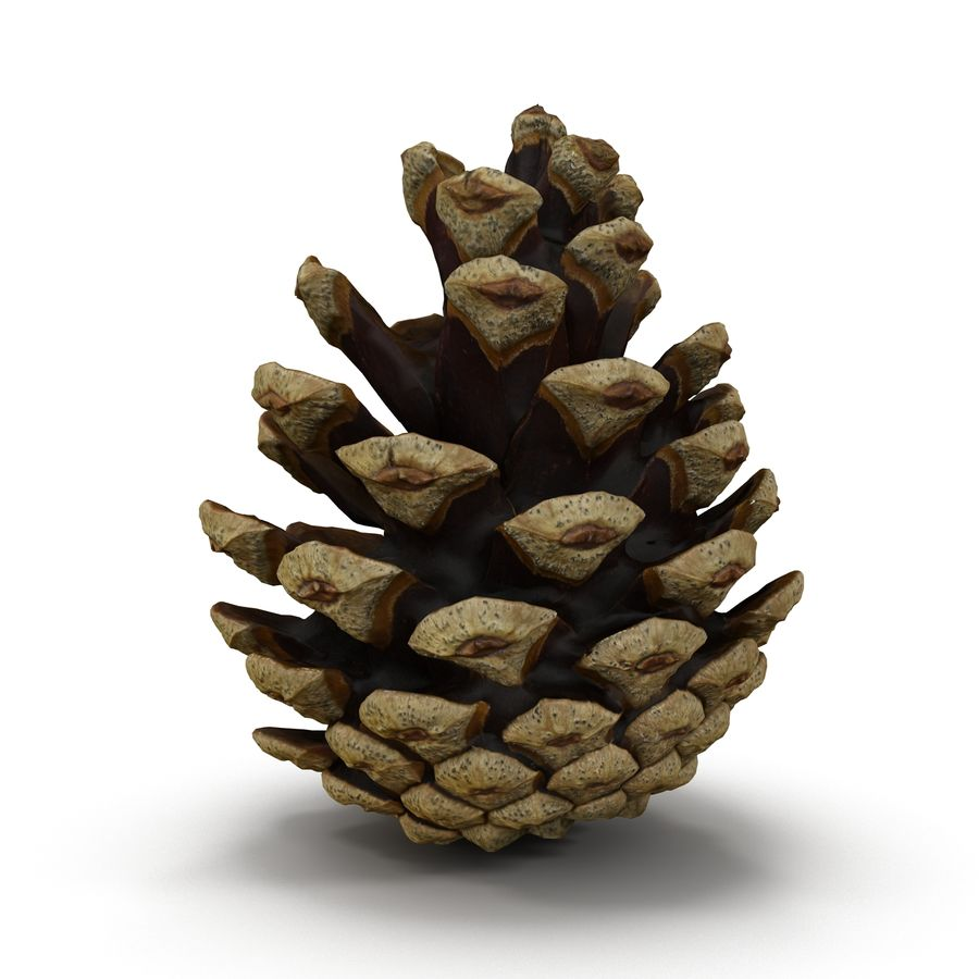 Pine Cone Open royalty-free 3d model - Preview no. 1