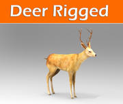 deer rigged 3d model