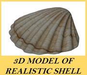 Realistic Shell 3d model