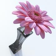 Gebera Daisy 3d model