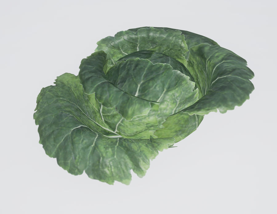 Cabbage royalty-free 3d model - Preview no. 1
