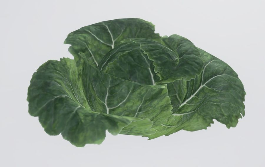 Cabbage royalty-free 3d model - Preview no. 4