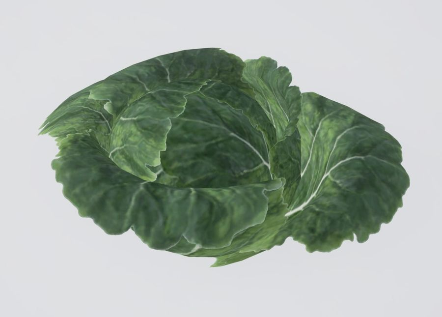 Cabbage royalty-free 3d model - Preview no. 2