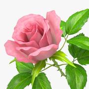rose_v_5 3d model