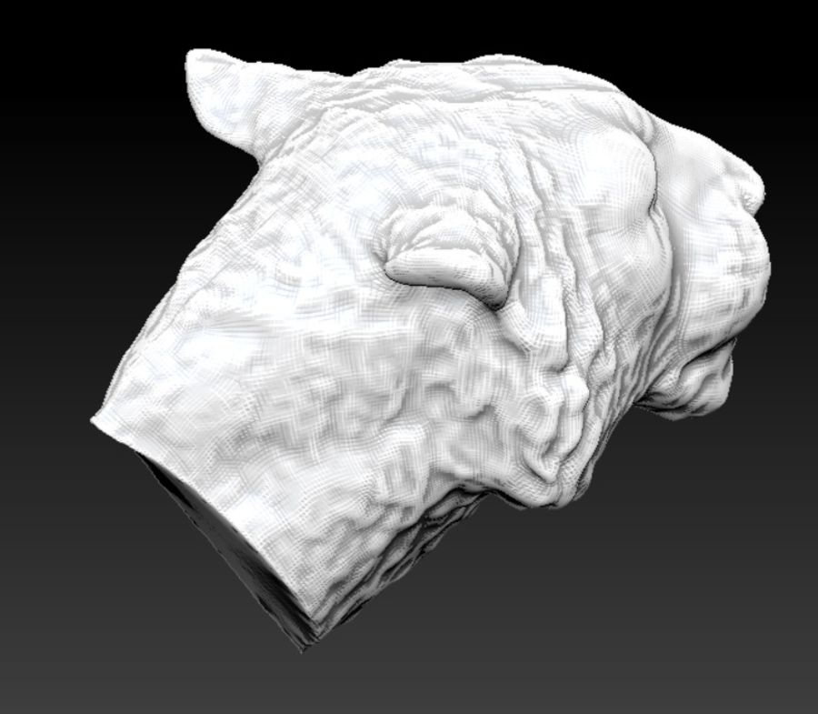 Siberian tiger head royalty-free 3d model - Preview no. 5