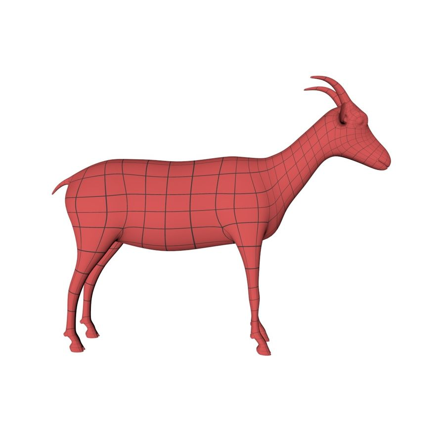 Goat base mesh royalty-free 3d model - Preview no. 1