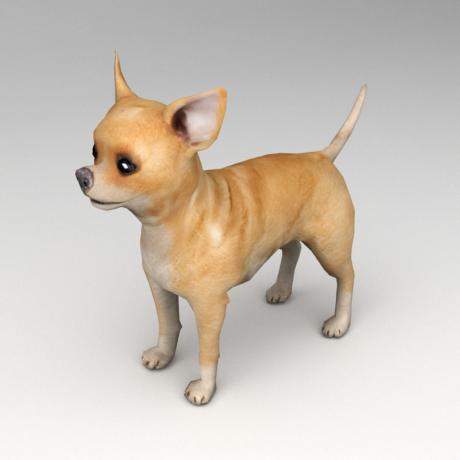 Chihuahua Rigged royalty-free 3d model - Preview no. 2