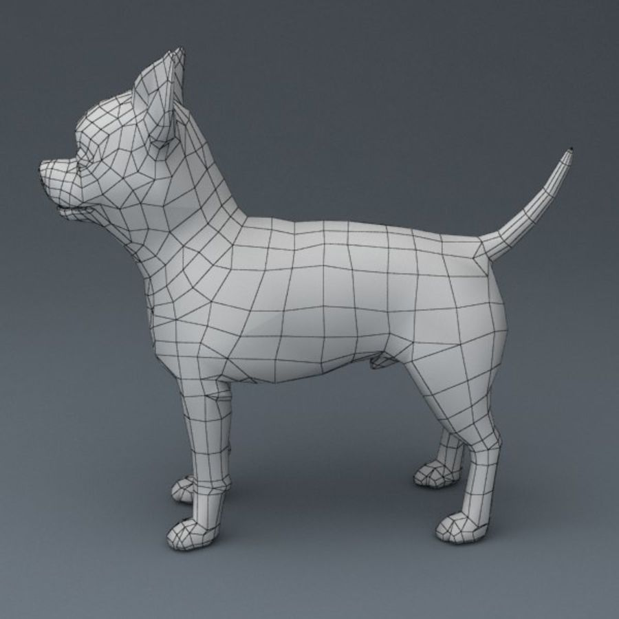 Chihuahua Rigged royalty-free 3d model - Preview no. 9