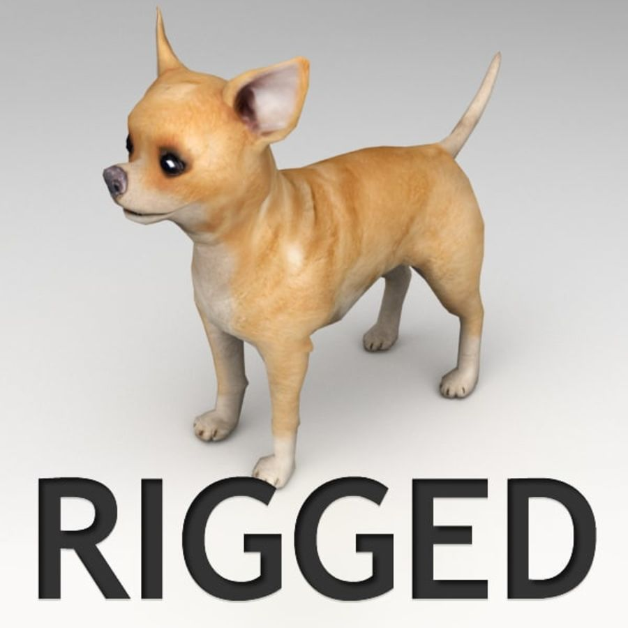 Chihuahua Rigged royalty-free 3d model - Preview no. 1