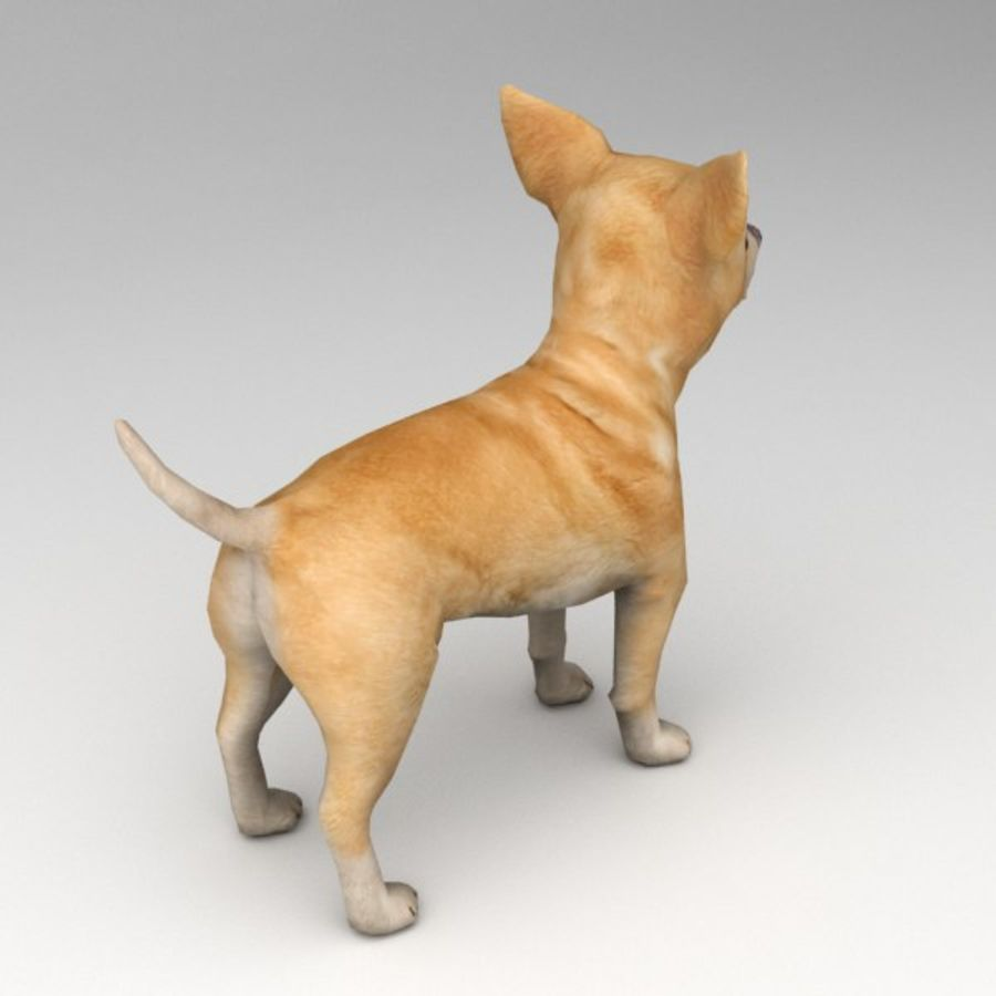 Chihuahua Rigged royalty-free 3d model - Preview no. 3
