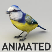 Tit Animated 3d model