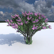 Lilac flowering (3 items) 3d model