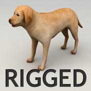 Labrador rigged 3d model