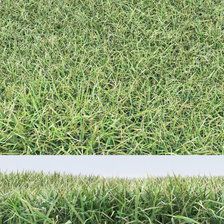 Grass royalty-free 3d model - Preview no. 1