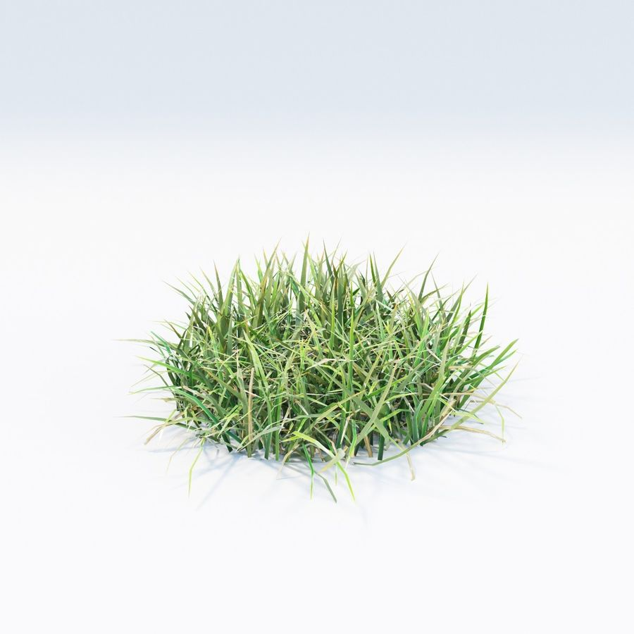 Grass royalty-free 3d model - Preview no. 5