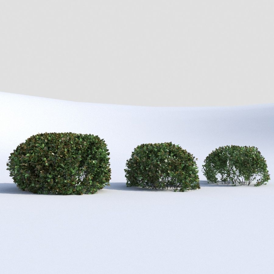 Round Hedge (3 items) royalty-free 3d model - Preview no. 7