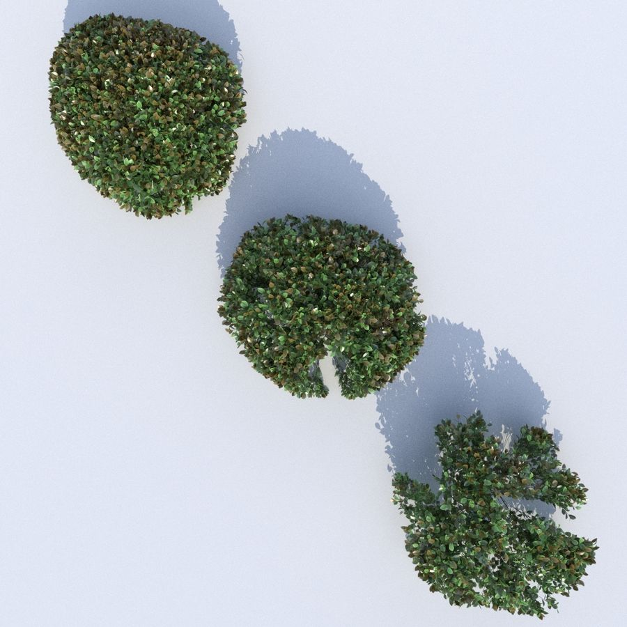 Round Hedge (3 items) royalty-free 3d model - Preview no. 8