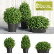 Plants for Indoor & Outdoor 3d model